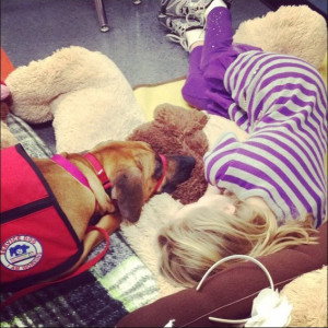 Cali, a therapy dog, working with a student
